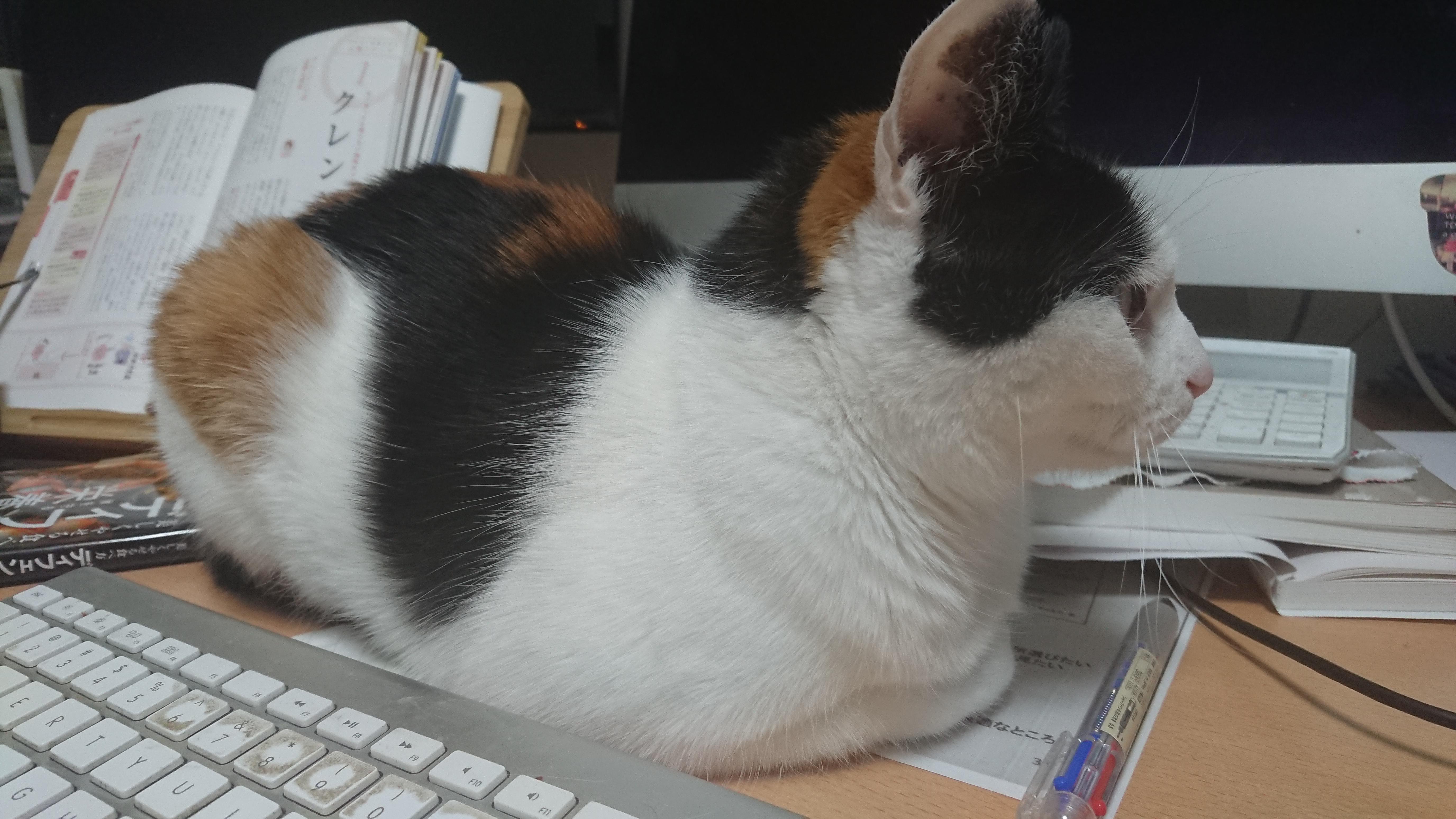とくべえ(猫)が10歳を過ぎました。